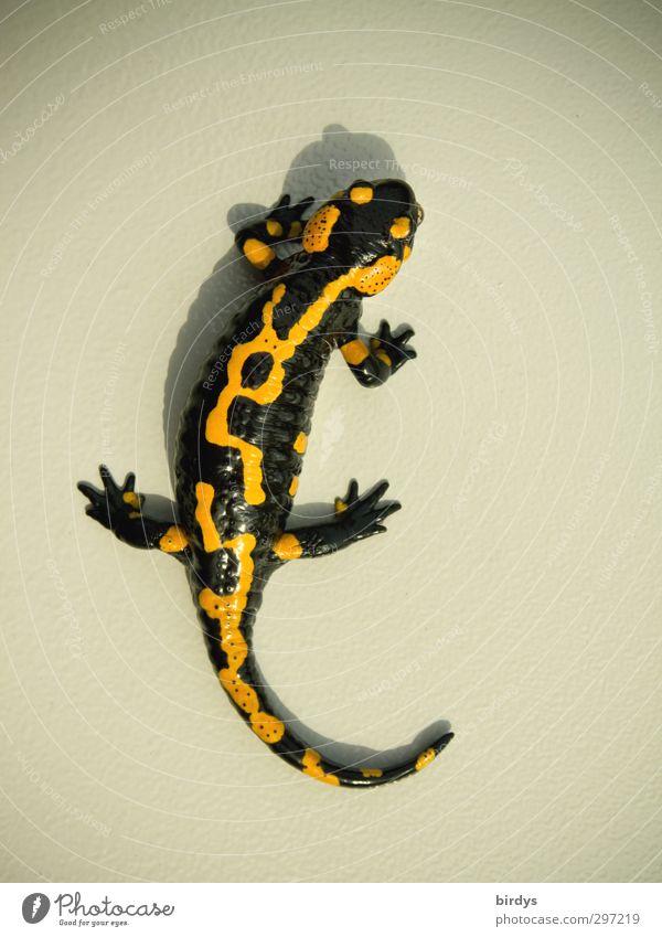Feuersalamander Individualität Wildtier Salamander Schwanzlurche 1 Tier krabbeln ästhetisch außergewöhnlich elegant einzigartig positiv schön gelb schwarz
