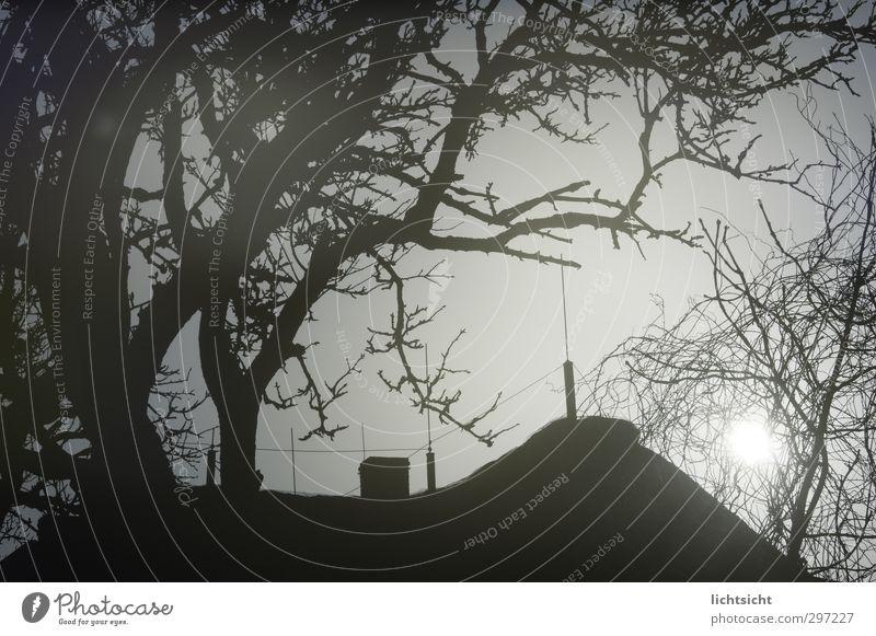 Baumhaus Himmel Wolkenloser Himmel Sonne Sonnenaufgang Sonnenuntergang Sonnenlicht Mond Herbst Winter Dorf Haus Einfamilienhaus Dach Schornstein gruselig