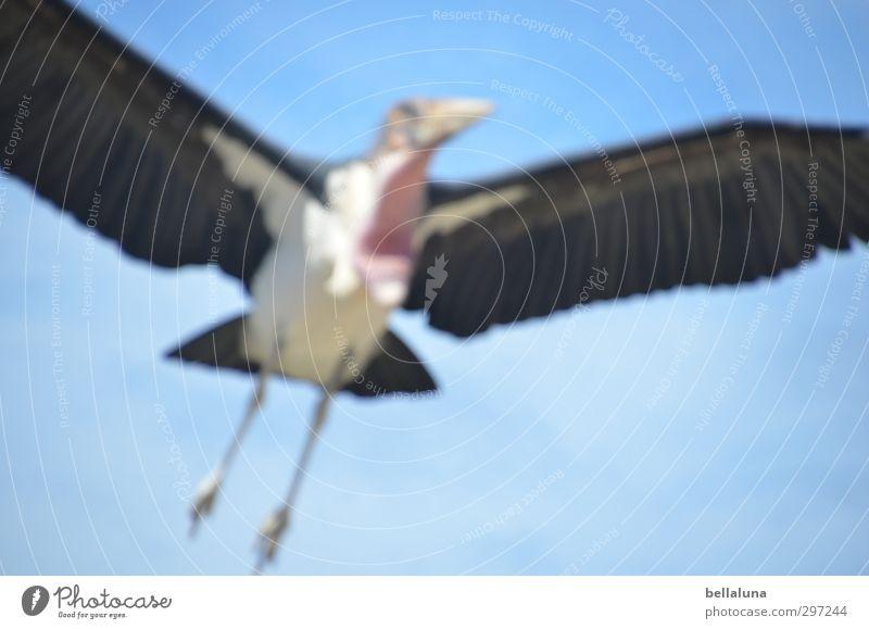 Zumutung | Unscharf ist das neue Scharf! Natur Tier Himmel Wolkenloser Himmel Sonnenlicht Frühling Sommer Schönes Wetter Wildtier Vogel Tiergesicht Flügel 1