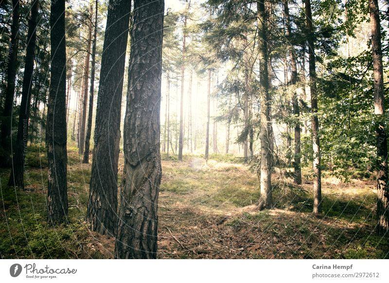 Wanderlust Freude Glück Fitness Leben harmonisch Wohlgefühl Zufriedenheit Erholung ruhig Meditation Freizeit & Hobby Joggen wandern Natur Landschaft Pflanze