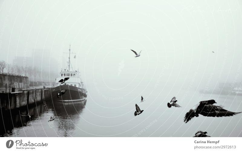 Hafen im Nebel Himmel Ferien & Urlaub & Reisen Wasser Meer Umwelt kalt Küste Freiheit Vogel Wasserfahrzeug Ausflug Wetter Luft Abenteuer Flügel