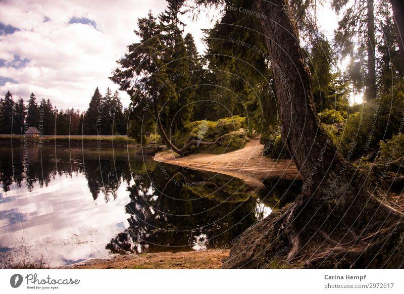 Waldsee Ferien & Urlaub & Reisen Natur Sommer Pflanze Landschaft Baum Erholung ruhig Leben Herbst Umwelt natürlich Tourismus Freiheit See