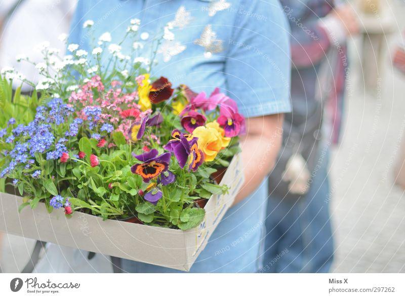 Blumenkiste blau Sommer Blume Blatt Frühling Blüte Stimmung Blühend Duft Kiste Muttertag Blumenhändler Vergißmeinnicht Stiefmütterchen Wochenmarkt Gartenpflanzen