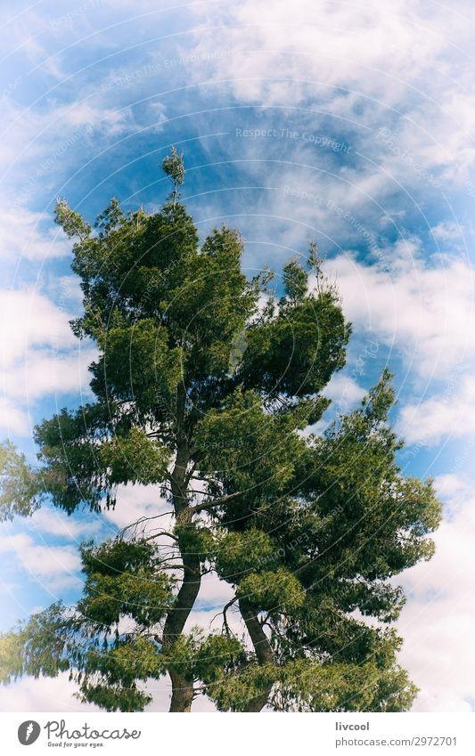 kiefer auf dem weg, berat - albanien Ferien & Urlaub & Reisen Tourismus Ausflug Natur Landschaft Pflanze Urelemente Wolken Frühling Baum Feld Hügel Ruine Stein
