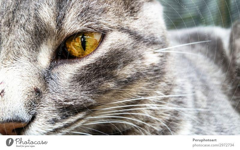 Katze blau Farbe schön grün weiß Tier dunkel Gesicht gelb natürlich Glück klein Spielen grau Aktion