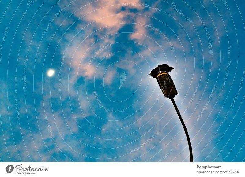 Rabe steht auf einem Laternenpfahl mit Blick auf den Himmel. Design Halloween Tier Wolken Mond Vogel Linie dunkel blau schwarz Angst Entsetzen Energie