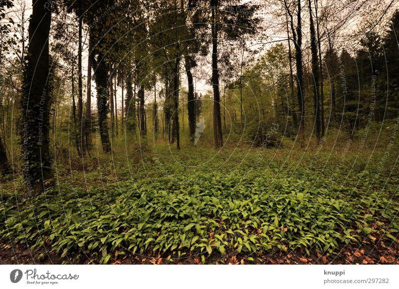 welcome to the jungle Umwelt Natur Landschaft Pflanze Wolken Sonnenlicht Frühling schlechtes Wetter Baum Blatt Wildpflanze Wald außergewöhnlich dunkel wild gelb