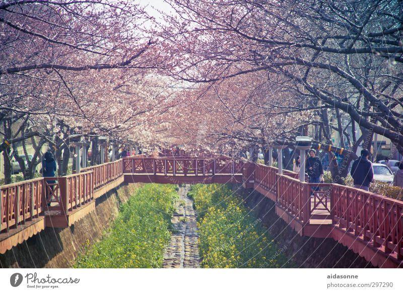 Kirschblüten Mensch Natur schön Stadt Baum Leben Frühling Blüte Garten Schönes Wetter Brücke Lebensfreude Blühend Duft Stadtzentrum Sehenswürdigkeit