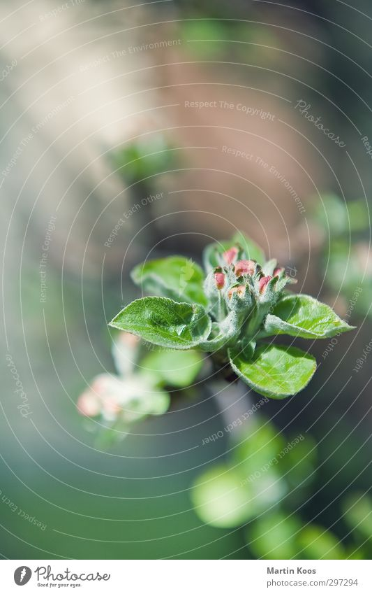 Blütenstand vom letzten Wochenende Natur Pflanze Baum Blatt Frühling Glück Wachstum frisch ästhetisch neu Blühend Zweig Duft Frühlingsgefühle