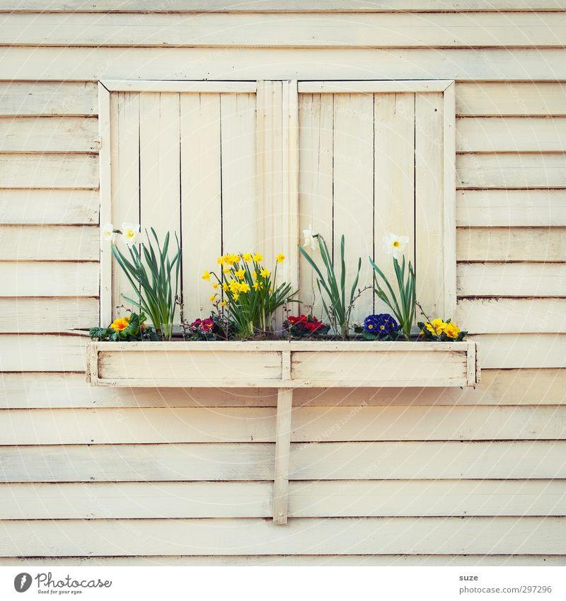 Damenbesuch Lifestyle Freizeit & Hobby Häusliches Leben Wohnung Dekoration & Verzierung Umwelt Frühling Pflanze Blume Blüte Hütte Mauer Wand Fassade Fenster