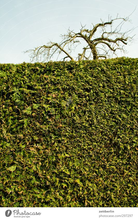 Hecke Himmel Natur Stadt Pflanze Baum Landschaft Umwelt Frühling Garten Park Wetter Klima Schönes Wetter Lifestyle Sträucher Ast