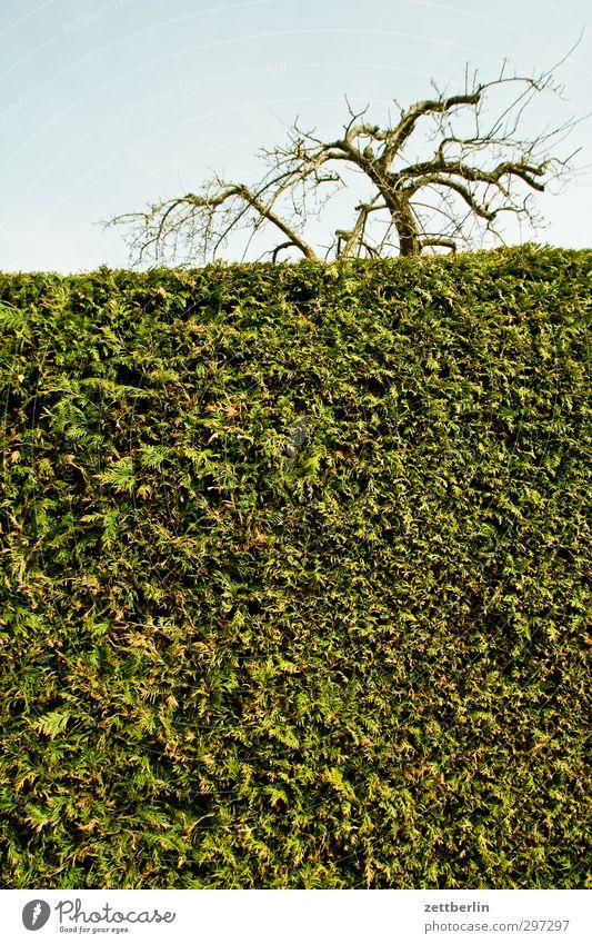 Hecke Lifestyle Wellness Garten Umwelt Natur Landschaft Himmel Frühling Klima Klimawandel Wetter Schönes Wetter Pflanze Sträucher Park Dorf Kleinstadt Stadt