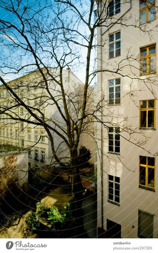Hof mit Sonne Häusliches Leben Haus Frühling Klima Klimawandel Wetter Schönes Wetter Baum Fassade Gefühle Altbau Berlin fenster hinterhaus Hinterhof innenhof