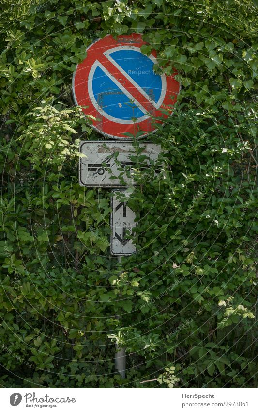 Einwachsen oder Abschleppen Natur Pflanze Sträucher Grünpflanze Verkehr Straßenverkehr Autofahren Verkehrszeichen Verkehrsschild Metall Zeichen Hinweisschild