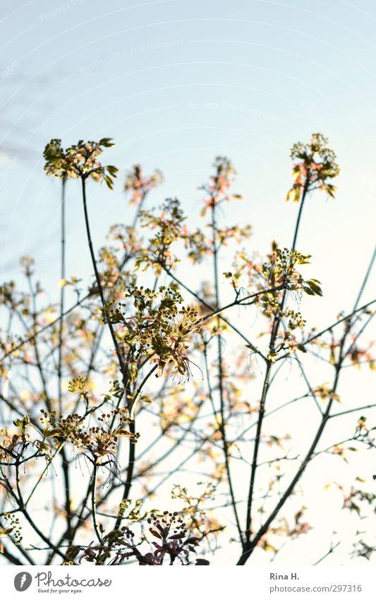 der Mai ist gekommen Himmel Baum Blatt Frühling Blüte hell natürlich Lebensfreude Frühlingsgefühle