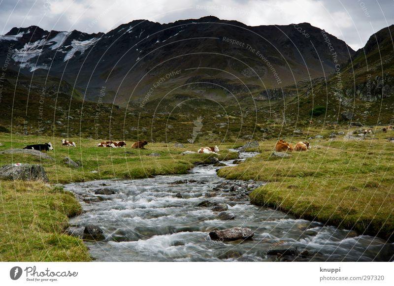 ein kuhles Plätzchen Himmel Natur grün Wasser weiß Sommer Pflanze Landschaft Tier Wolken schwarz Umwelt Berge u. Gebirge Schnee Gras braun