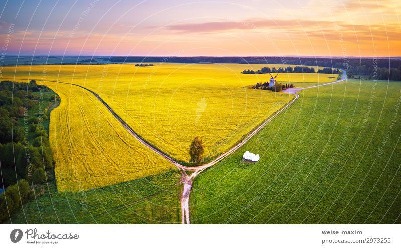 Alte Windmühle im Rapsblütenfeld bei Sonnenaufgang im Frühjahr schön Sommer Industrie Umwelt Natur Landschaft Pflanze Erde Himmel Wolken Horizont
