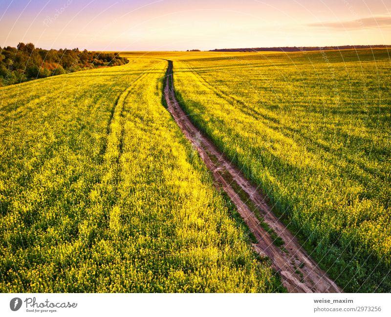 Dirt Road im Canola Flowering Field, Frühlingssonnenaufgang. schön Sommer Industrie Umwelt Natur Landschaft Pflanze Erde Himmel Wolken Horizont Sonnenaufgang