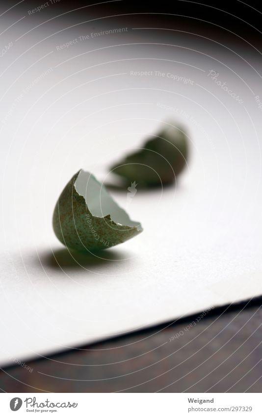 Auf geht`s - 4 grün weiß grau träumen Vogel Kraft Mut selbstbewußt Vorfreude Optimismus
