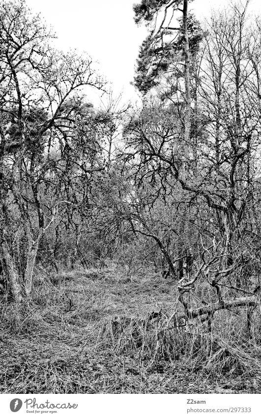 ZAUBERWALD Natur Einsamkeit Landschaft ruhig Wald Umwelt dunkel Frühling Traurigkeit natürlich träumen Stimmung Angst Sträucher trist Wandel & Veränderung