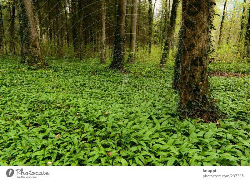 green Natur grün Pflanze Baum Sonne Landschaft Blatt Wald Umwelt Gras Frühling hell Luft braun wild Erde