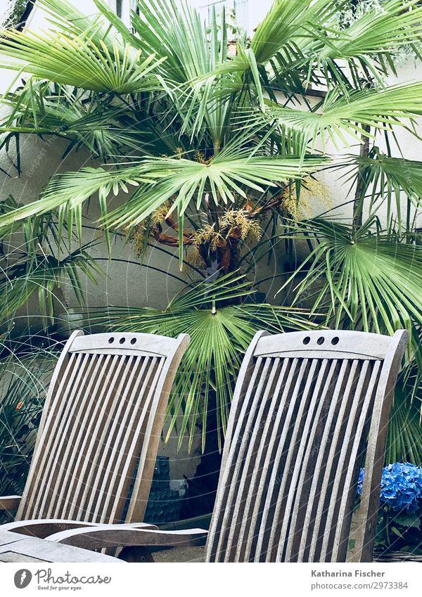 Relaxing area Sommer Natur Frühling Pflanze Palme blau braun grün türkis weiß Erholung Palmenwedel Stuhl Holz Farbfoto Außenaufnahme Menschenleer Morgen Tag