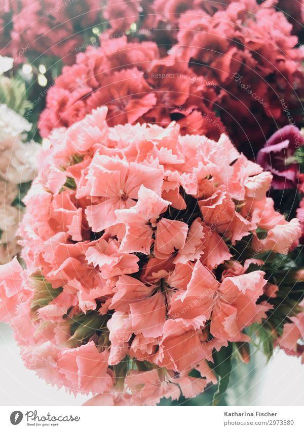 Sommerblumenstrauß Natur Pflanze Frühling Blume Blatt Blüte Blühend leuchten Fröhlichkeit frisch schön grün violett rosa rot weiß Blütenblatt Farbfoto