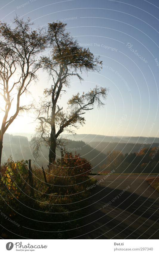 früh Natur Landschaft Himmel Wolkenloser Himmel Sonnenaufgang Sonnenuntergang Sonnenlicht Herbst Schönes Wetter Nebel Baum Wald Hügel Stimmung Morgendämmerung