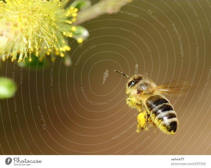 Landeanflug 1 Natur Pflanze Tier Umwelt Frühling klein Blüte Gesundheit Arbeit & Erwerbstätigkeit fliegen Wildtier Schönes Wetter Sträucher ästhetisch süß Blühend