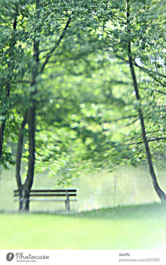 Frühling harmonisch Wohlgefühl Zufriedenheit Erholung ruhig Meditation Landschaft Schönes Wetter Blatt Blätterdach Park Teich frisch schön grün Frühlingsgefühle