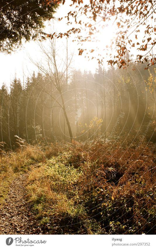 Herbstwald wandern Umwelt Landschaft Pflanze Erde Luft Sonne Sonnenlicht Nebel Baum Gras Wald Hügel atmen leuchten Erholung Frieden Stimmung Wege & Pfade