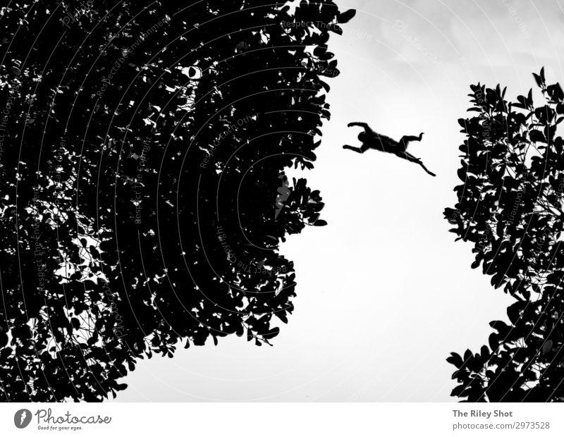 Macaque spielt mit seinen Geschwistern eine Fahne. Ferien & Urlaub & Reisen Tourismus Ausflug Abenteuer wandern Tierschutz wild Wildnis Sri Lanka Asien laufen
