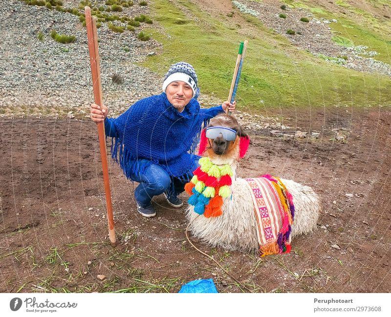 Blick auf ein lustiges Alpaka mit Sonnenbrille und einem Touristen. Ferien & Urlaub & Reisen Tourismus Sommer Berge u. Gebirge Mann Erwachsene Natur Landschaft