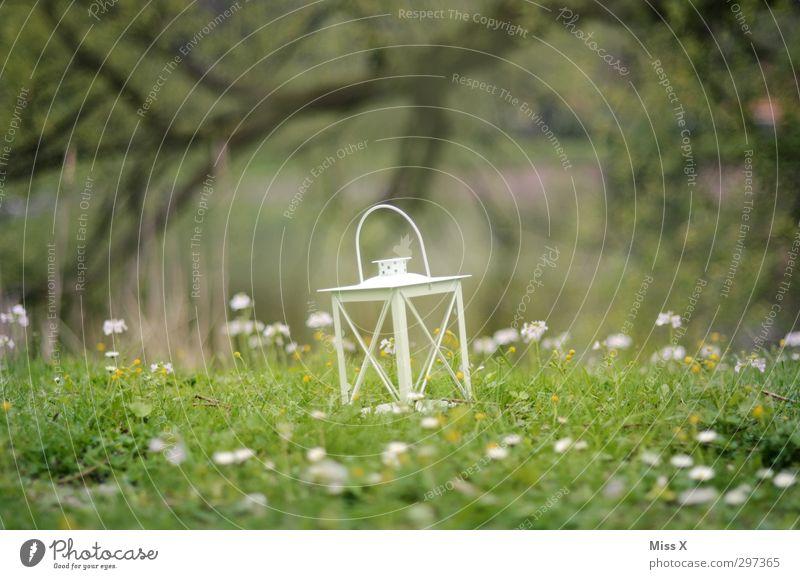 Romantik Dekoration & Verzierung Lampe Feste & Feiern Natur Frühling Sommer Blume Gras Blüte Garten Park Wiese leuchten Stimmung Laterne Gänseblümchen Picknick