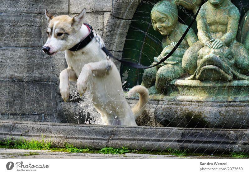 Wolfshund Jacko Hund Sommer Tier Bewegung Spielen Schwimmen & Baden springen Haustier toben Kühlung