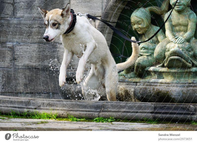 Jacko beim Baden Wellness Zufriedenheit Schwimmen & Baden Spielen Fitness Sport-Training Wassersport Frühling Sommer Tier Haustier Wildtier Hund 1 springen