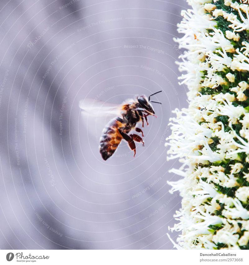 summ, summ, summ... Umwelt Natur Pflanze Tier Frühling Sommer Klimawandel Blume Garten Nutztier Biene 1 elegant frei nachhaltig schön gelb grau schwarz