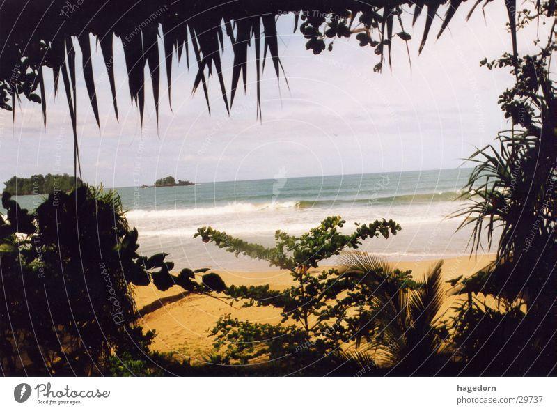 Meer durch Djungle Strand Palme Versteck Indonesien Los Angeles Sumatra