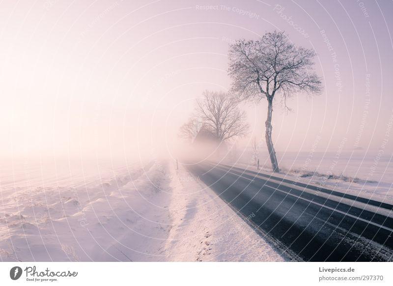 Straße in den Nebel Natur Landschaft Pflanze Himmel Wolkenloser Himmel Sonne Sonnenaufgang Sonnenuntergang Sonnenlicht Winter Wetter Schönes Wetter Eis Frost