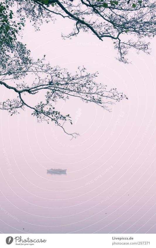 Boot auf der Müritz Umwelt Natur Landschaft Pflanze Wasser Himmel Wolken Herbst Nebel Baum Wildpflanze Seeufer Fischerboot Schwimmen & Baden violett