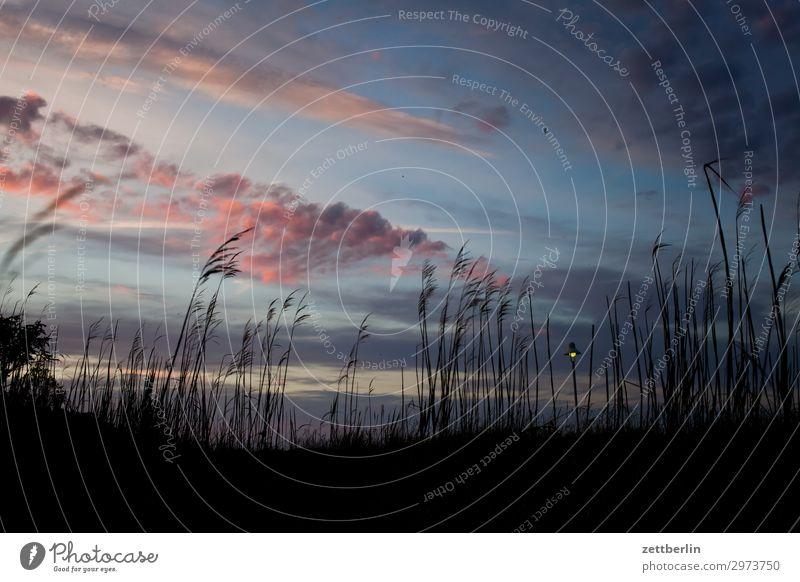Abends auf Rügen Himmel Ferien & Urlaub & Reisen Natur Himmel (Jenseits) Wolken Reisefotografie Ferne dunkel Gras Tourismus Insel Sehnsucht Ostsee