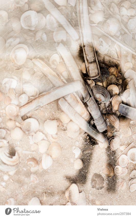 Rømø | Muschelsucher androgyn 1 Mensch Strand einzigartig Surrealismus Schatten Doppelbelichtung Suche Spaziergang Farbfoto Experiment abstrakt