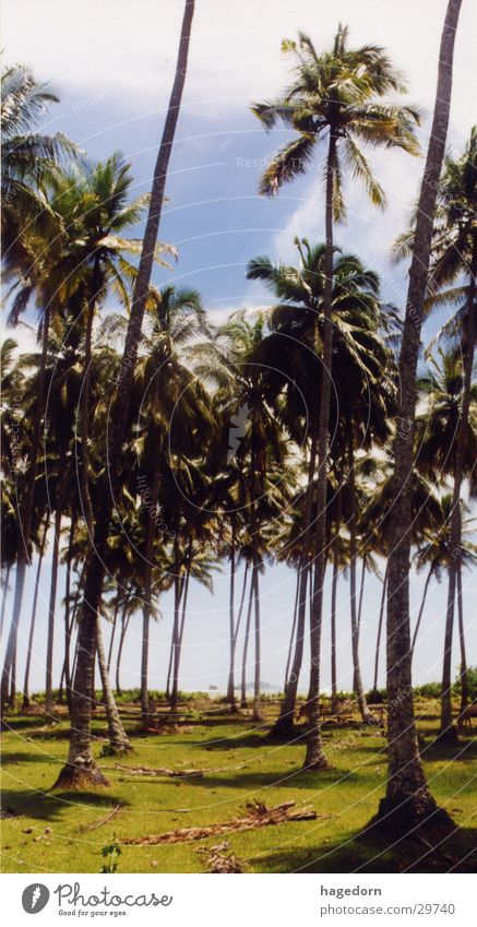 Cathedral Strand Wege & Pfade Palme Indonesien Sumatra