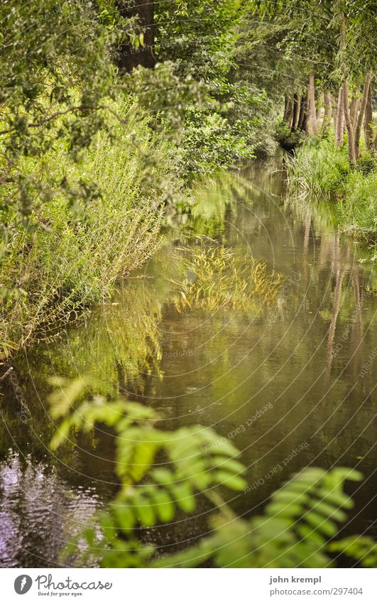 Cottbus - Die grüne Hölle Umwelt Natur Landschaft Wasser Pflanze Baum Gras Sträucher Park Moor Sumpf Bach Wachstum authentisch wild braun Lebensfreude