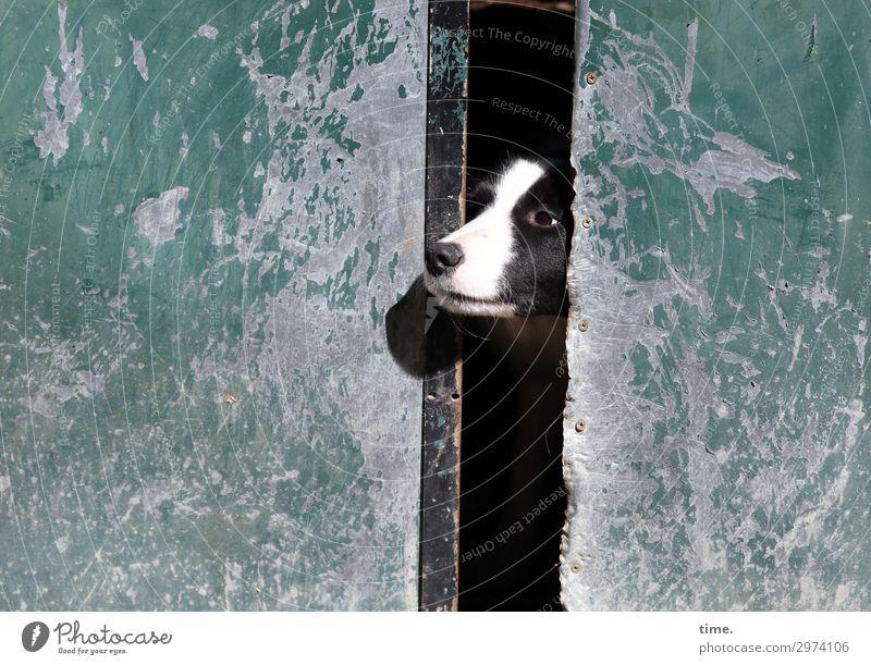 Türspion Hund Tier Einsamkeit Wand Zeit Mauer Stimmung Perspektive warten beobachten Neugier entdecken Hoffnung Schutz Sicherheit Haustier