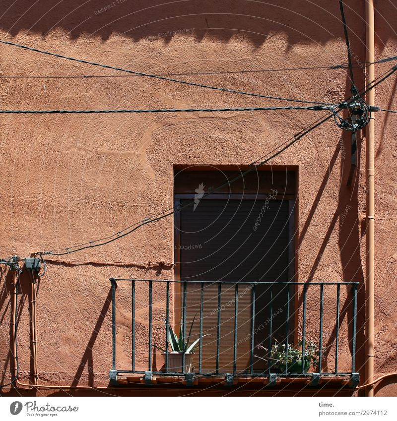 Geschichten vom Zaun (XXII) Energiewirtschaft Schönes Wetter Pflanze Balkonpflanze Kaktus Lissabon Stadtzentrum Haus Mauer Wand Tür Dach Geländer Fallrohr