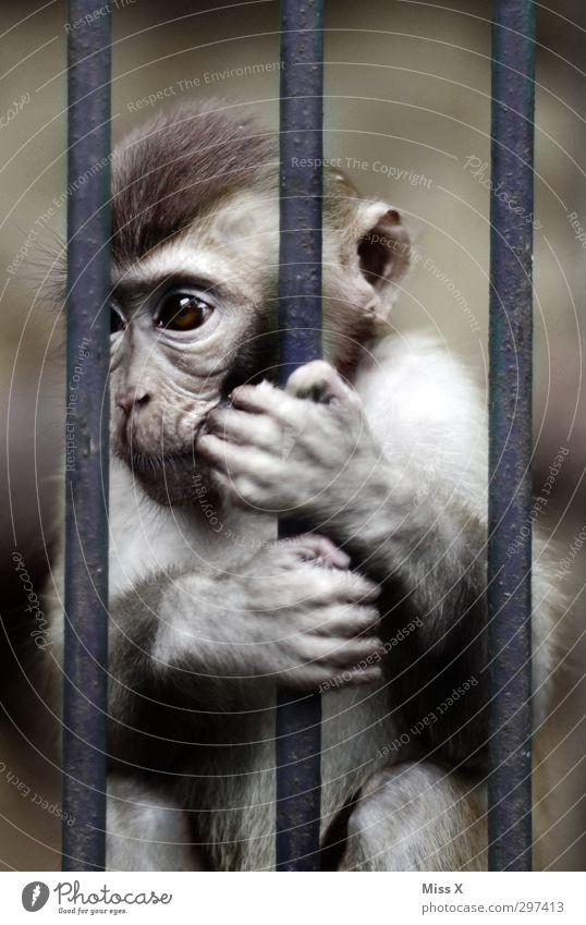 Gefangenschaft Einsamkeit Tier dunkel Tierjunges Gefühle Traurigkeit Stimmung Trauer festhalten Fell Sorge gefangen Gitter Frustration Affen Käfig