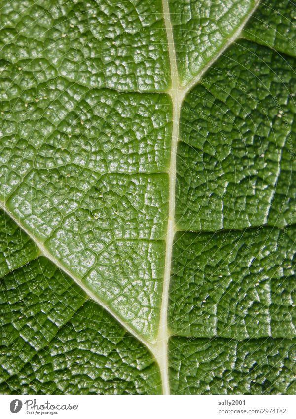 klar strukturiert... Pflanze Blatt Grünpflanze ästhetisch exotisch groß natürlich grün Zufriedenheit einzigartig Natur Ordnung zellstruktur Strukturen & Formen