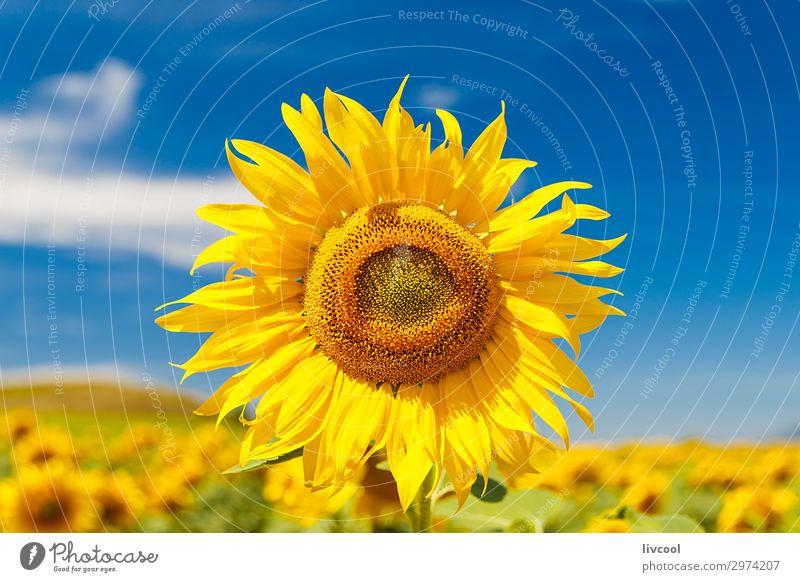 Ferien & Urlaub & Reisen Natur Sommer Pflanze blau schön Landschaft Sonne Blume Wolken Blatt ruhig Freude gelb Wiese Gefühle