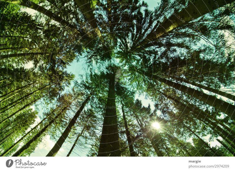 Hoch hinaus Ferien & Urlaub & Reisen Ferne Sommer wandern Umwelt Natur Landschaft Klima Schönes Wetter Pflanze Baum Grünpflanze Nutzpflanze Wald braun grün